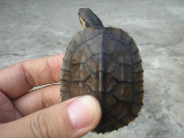 鼎湖木土野生龟鳖养殖场
